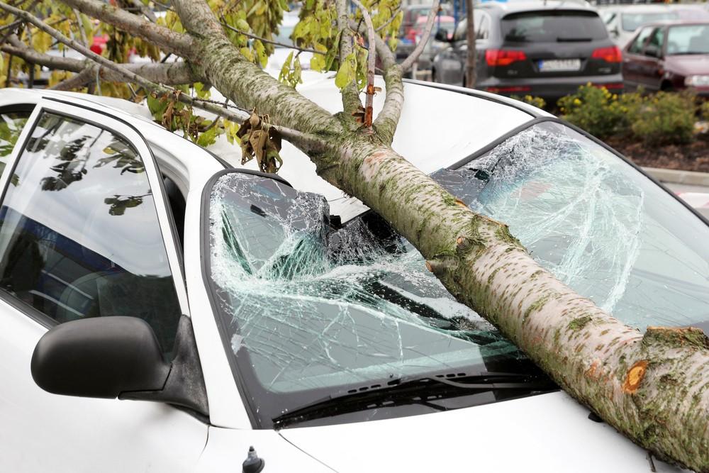 Дерево упало на крышу автомобиля